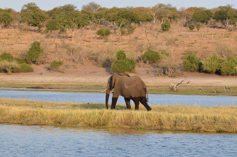 Lonely elephant on deserted island