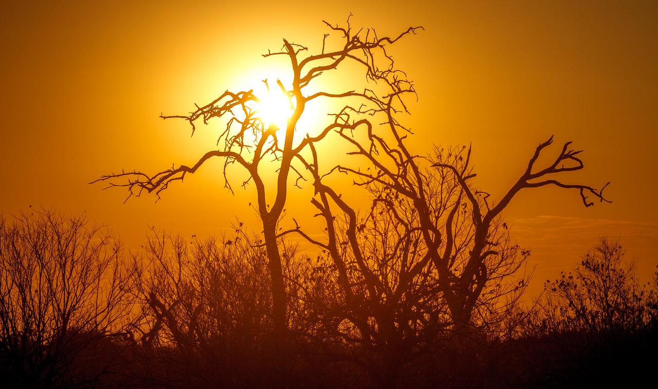 Stunning sunrise at splendid Chobe NP.