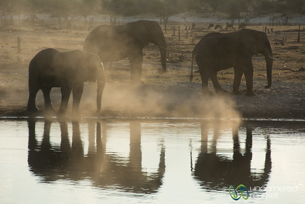 Dusty Elephants Reflected in Watering Hole - Leroo La Tau, Botswana