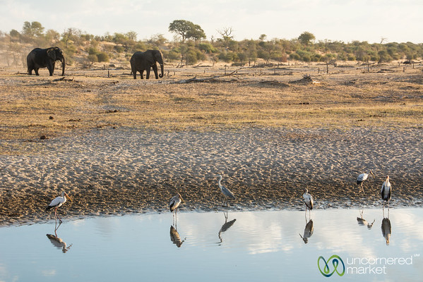 Yellow-Billed Storks and Elephants - Leroo La Tau, Botswana