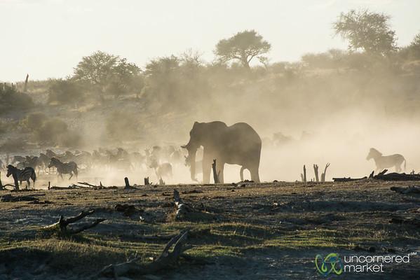Herd of Zebra Running Away - Leroo La Tau, Botswana
