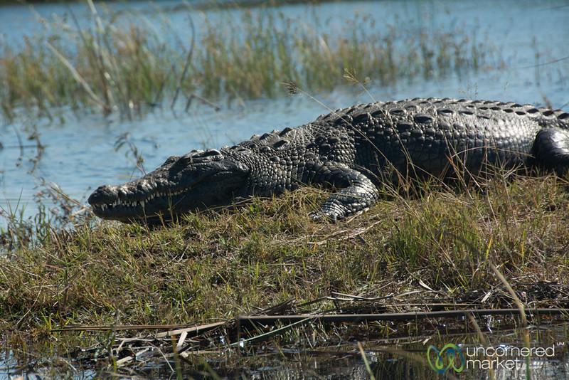 Crocodile Smile - Camp Okavango, Botswana