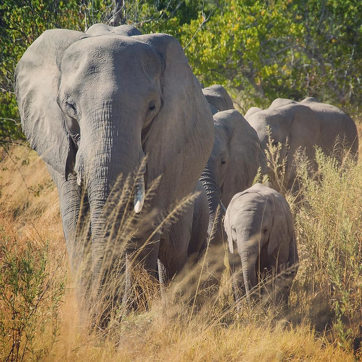 Elephant mother and child - Moremi Game Reserve, Botswana