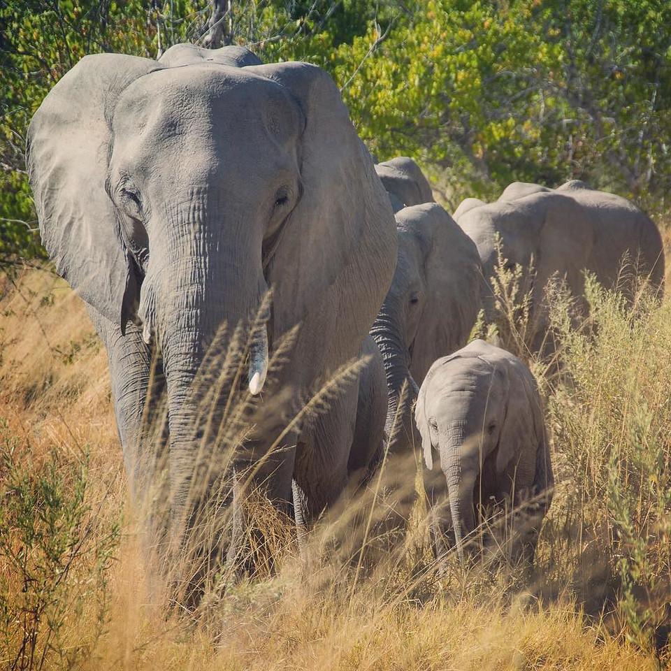 Elephant mother and child - Moremi Game Reserve, Botswana
