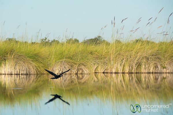 Taking Flight Along Khwai River - Camp Xakanaxa, Botswana