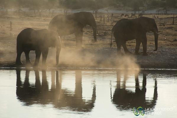 Dusty Elephants Reflected in Watering Hole - Leroo La Tau, Botswana