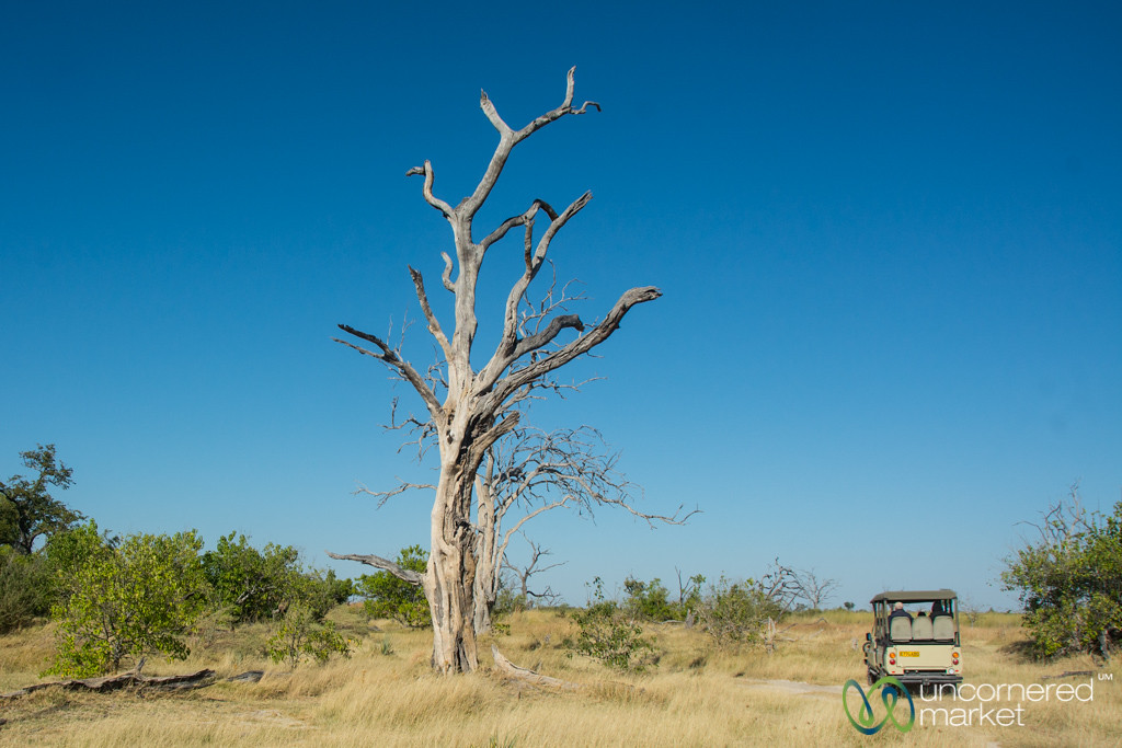Safari Roads, Moremi Game Reserve - Botswana