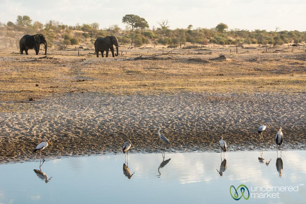 Yellow-Billed Storks and Elephants - Leroo La Tau, Botswana
