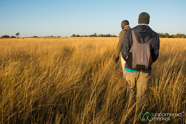 Walking Safari - Camp Okavango, Botswana