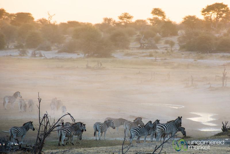 Zebra at Dusk Near Boteti River - Leroo La Tau, Botswana