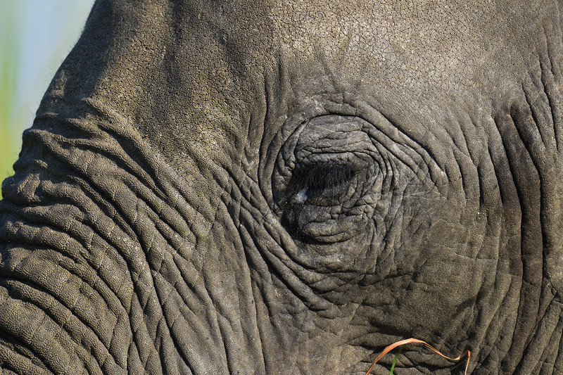 Sometimes even elephants must cry...