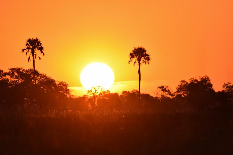 Sunset in Okavango Delta