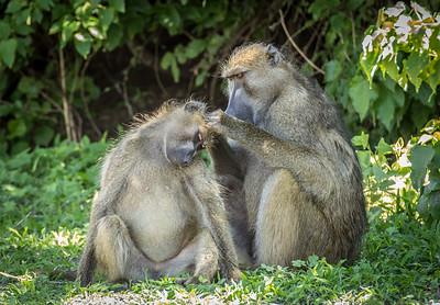 Monkey Love 1