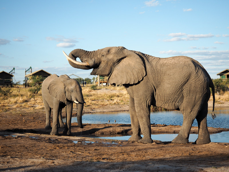 Elephant Sands in Nata, Botswana