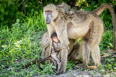 Monkey Love 2