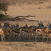 Impala Herd hiding from the intense sun at Midday