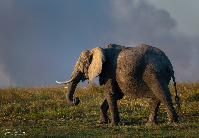 Late Afternoon Near The Chobe