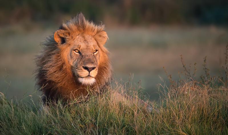 The King Surveys His Kingdom