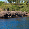A family of elephants come to drink at the Chobe River in Botswana, near Kasane. Image taken from a raft on the river.