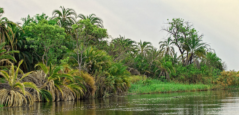 A typical River scene in the Okavango Delta.