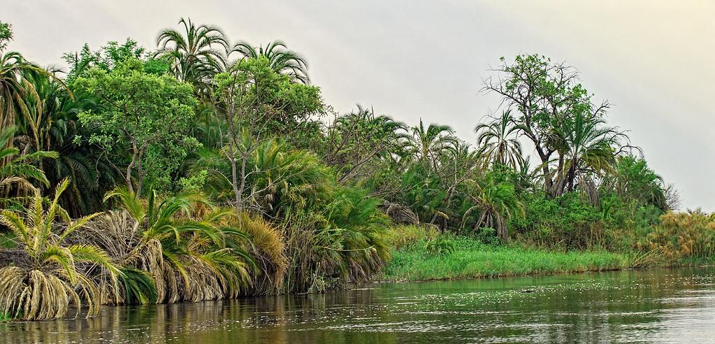 A typical River scene in the Okavango Delta.