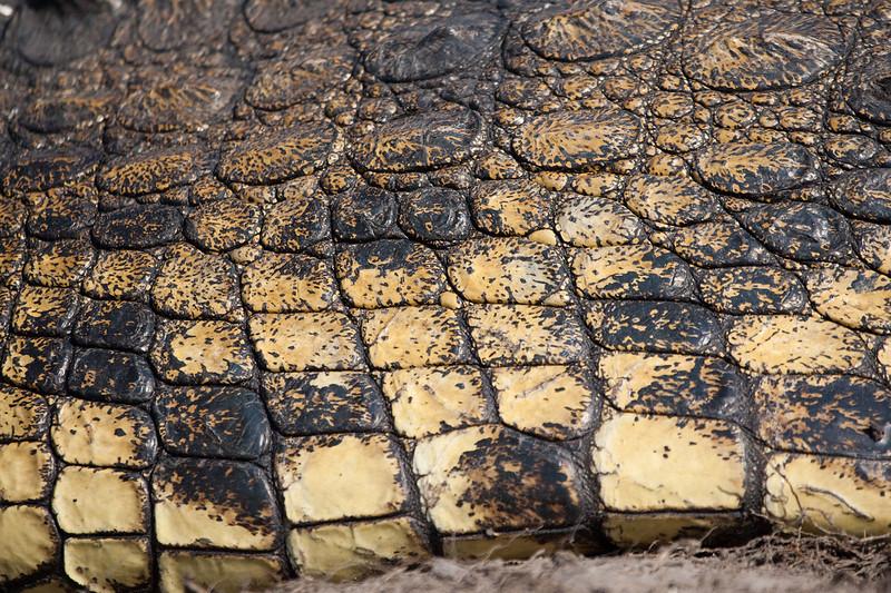 Close up of a Crocs skin.