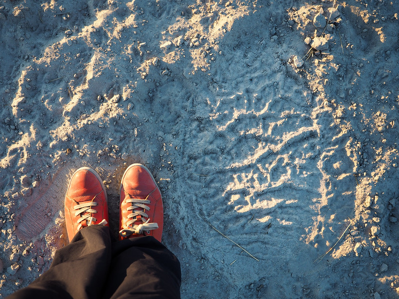 Elephant footprint in Botswana