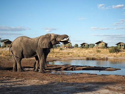 Elephant Sands in Nata, Botswana