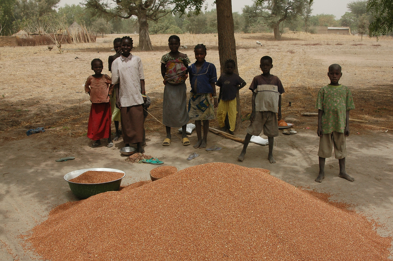 Winnowing Grain