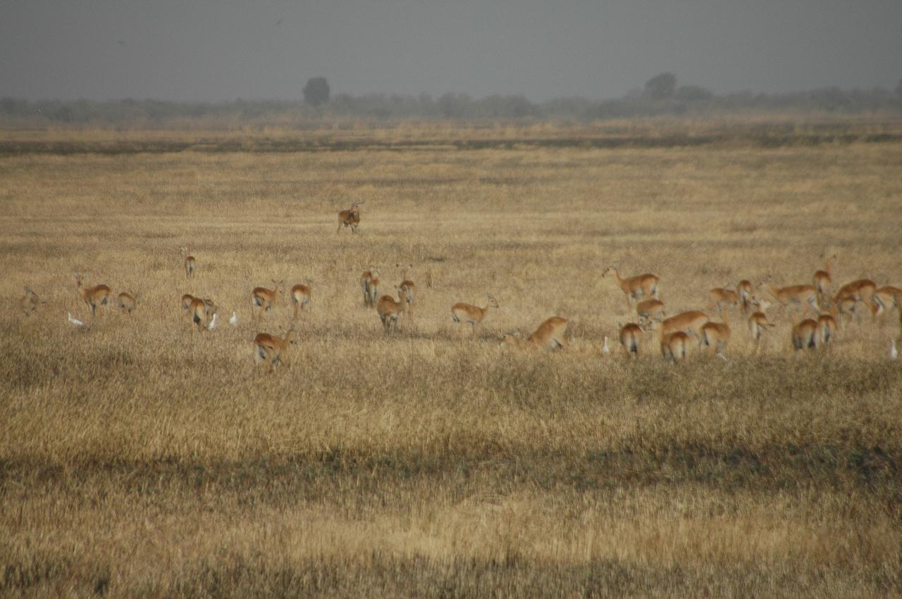Waza National Park
