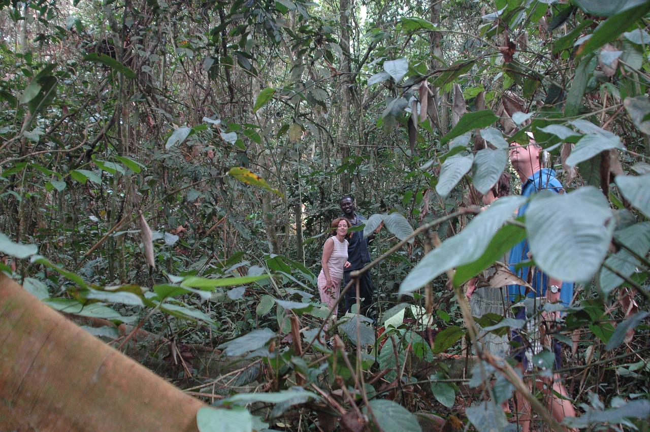 Mefou Primate Rescue Center