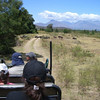 Riding around the reserve in search of the Big 5