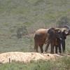 #3 of the Big 5 - elephants