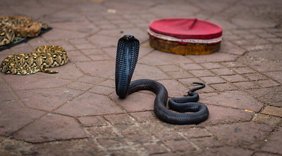 Snake, Marrakech Square