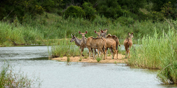 Kudu Group at River
