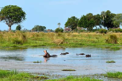 Hippos-Environmental Portrait -M