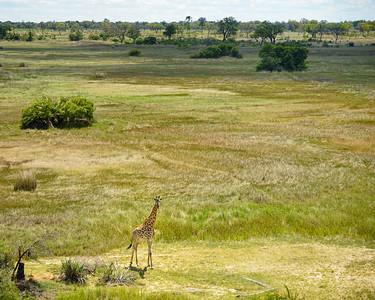 Aerial Scenic & Giraffe