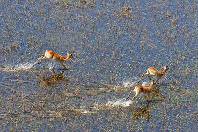 Aerial Scenic & Wildlife 9 - M