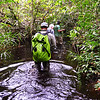 Wading through the swamp on way to Mondika Camp. The swamp waters came well up to thigh high at some points in the half hour slog through it. Nouabale Ndoki National Park, Congo Republic