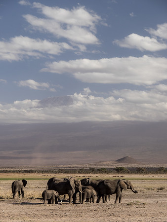 Elephants below Mt Kilamanjaro, Amboseli Nat Park
