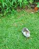 Mama Bwindi, as we name the Lodge cat, has a kitten