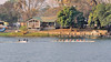 We see racing shells on the river and find out that  the Zambezi International Regatta will be held in two days and teams from Oxford, Cambridge and South African Universities will be racing at the Zambezi Boat Club ( the building in the picture).  The event has a rich, exciting history. It was held previously in 1904, 1905 and 1907.  The last occasion in 2004 included Brown University from the USA.