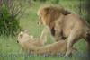 lionsmate281543