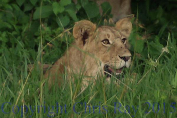 lion271289