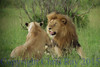lionsmate281538