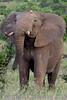 elephant230575