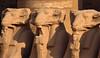 Ram statues, Karnak temple, Luxor