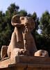 Ram statue, Karnak temple, Luxor