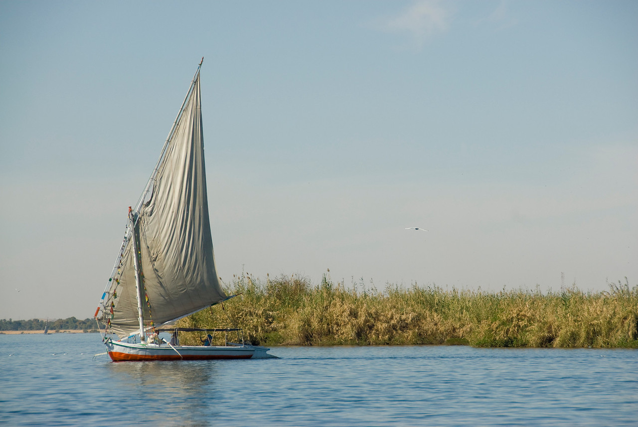 Felucca on Nile River along reeds - Aswan, Egypt