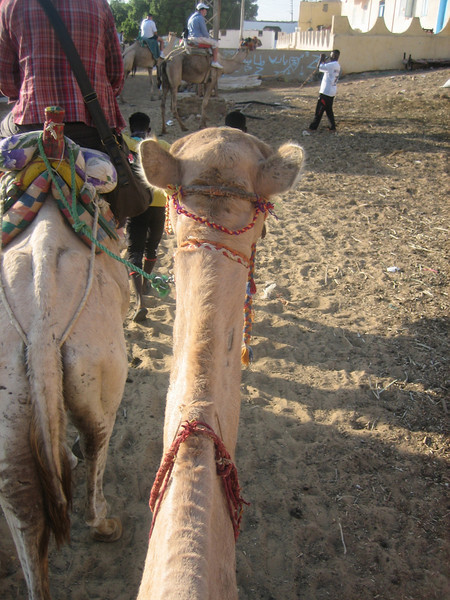 camel ride to Nubian village